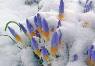 fiori-nella-neve